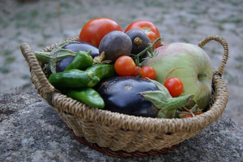 Cesto de vegetais diretos da horta