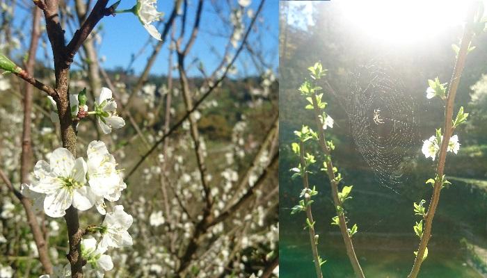 blossom spring 2017 quinta da bouça