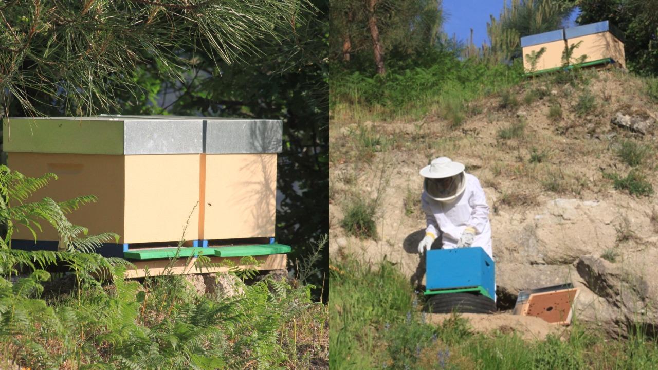 hives quinta da bouça agritourism