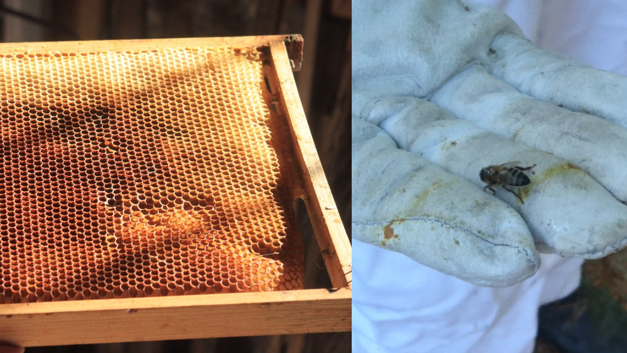 abelhas mel quinta da bouça agroturismo