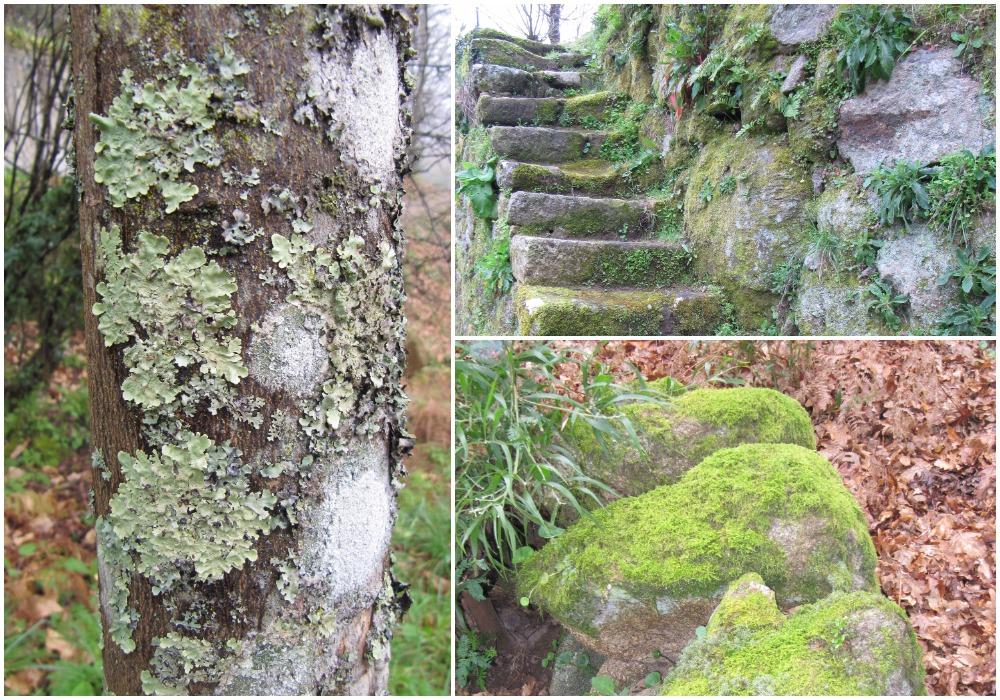 Hiking in Quinta da Bouça